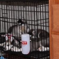 november-21_-2009-img_4742