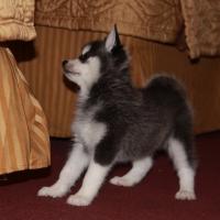 november-21_-2009-img_4816