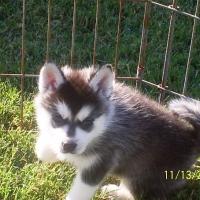 november_14__2009-pup2