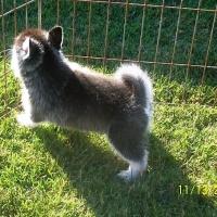 november_14__2009-pup3