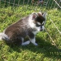november_14__2009-pup4