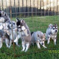 november_14__2009-puppies3