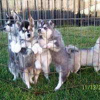 november_14__2009-puppies4