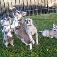 november_14__2009-puppies5