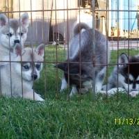 november_14__2009-puppies6
