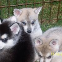 november_14__2009-puppies7