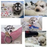 puppiesweek2